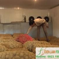 bảo quản khoai tây giống