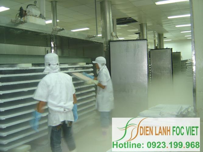 lắp đặt kho lạnh thủy sản