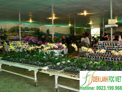 kho lạnh bảo quản hoa tươi